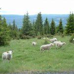 Kraj świętych krów